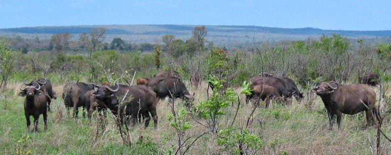 big fiveHoe Groot Is Krugerpark.htm #5