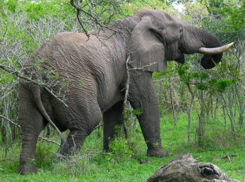 big fiveHoe Groot Is Krugerpark.htm #6